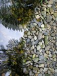 Reflected ferns and pebbles in a pool