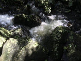 dappled creek