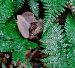 furry grey fungus