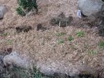 close up new garden