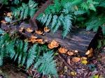 yellow plate fungi