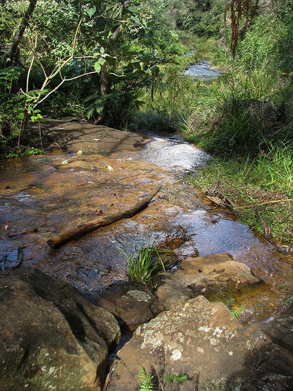 rainforest creek