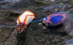 Bright sea cucmbers