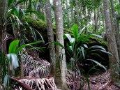 mossy fallen tree