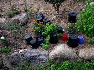 Pots covering little plants