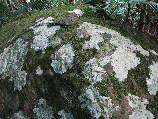 Rock with moss