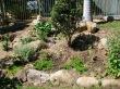 Garden replanted