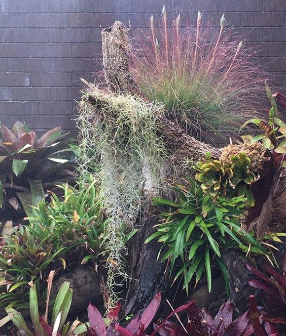 Strange garden