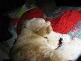 Jasper is asleep