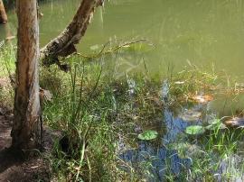 Lagoon edge 2
