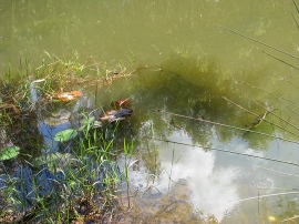 Lagoon edge 3