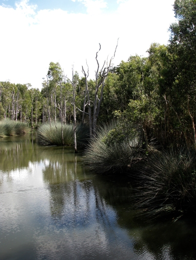 Lagoon with sedges