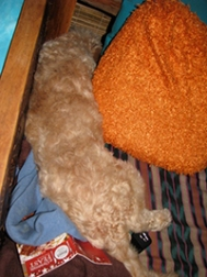 Asleep on the day bed