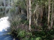 Lagoon with tea trees