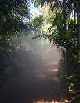 Walking along a misty path