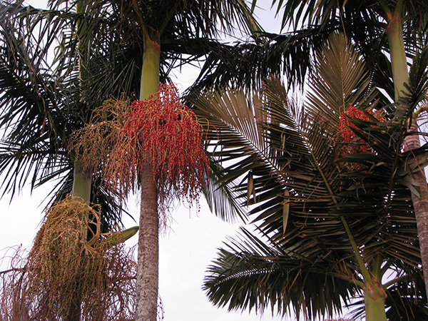 Palms in evening light