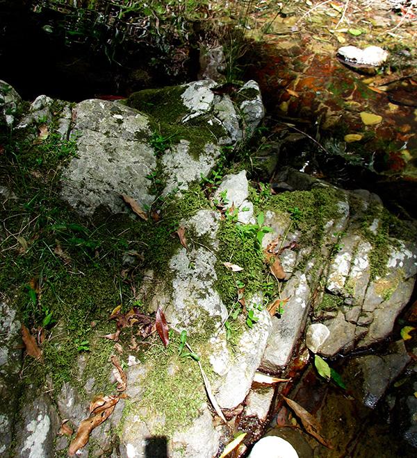 mossy rock