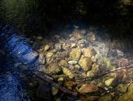Rainforest pool