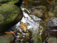 rainforest creek with rocks