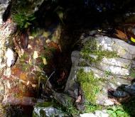 Mossy rocks near water