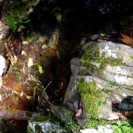 Mossy rocks near water