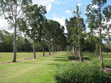 Tree avenue