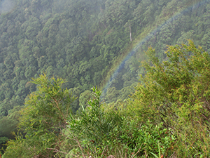 Rainbow at lookout