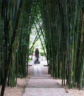Bamboo-walk