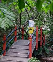 Japanese-bridge-and-path