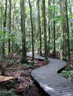 Rainforest-boardwalk