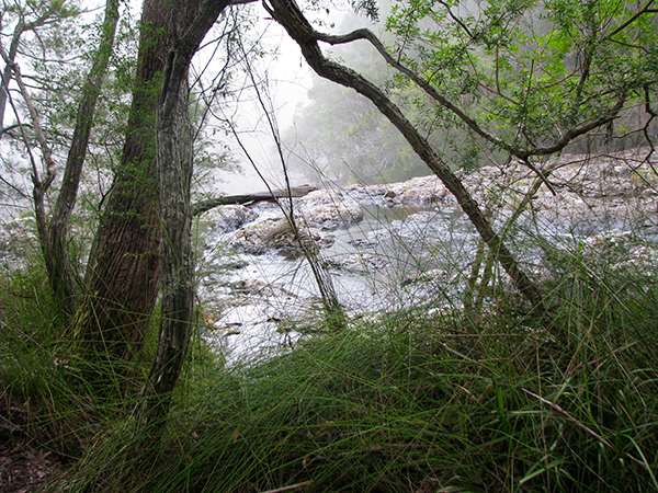 Top-of-Minyon-Falls,-Northern-NSW,-Australia