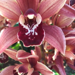 orchid-spray