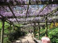 wisteria-walk-and-taz