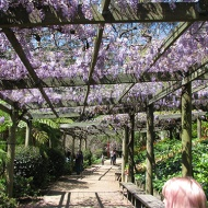 wisteria-walk-and-taz