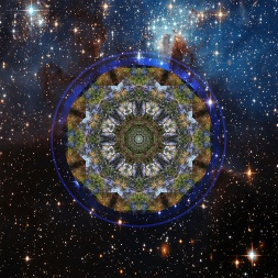 Forestwater-with-cosmos-mandala