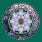 Light Iris mandala