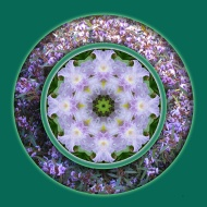 Light-iris-mandala