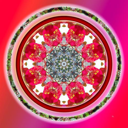 The-camellia-mandala