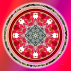 The camellia mandala