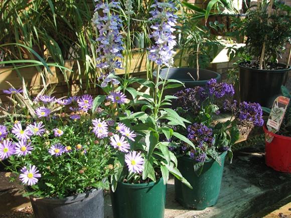 3 new plants