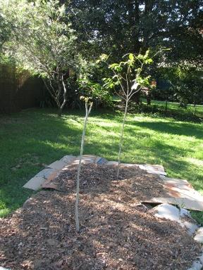 Backyard two more trees