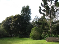 view down yard