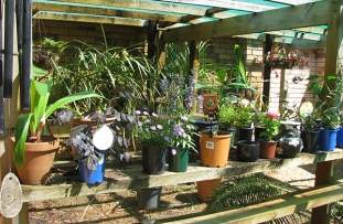 Plants;waiting for planting out