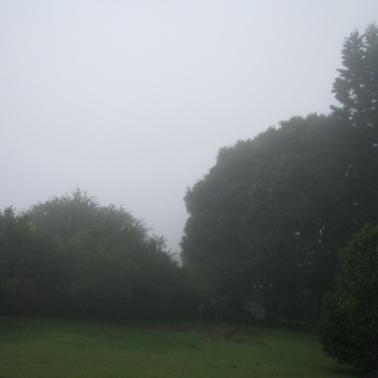 mountain garden fog