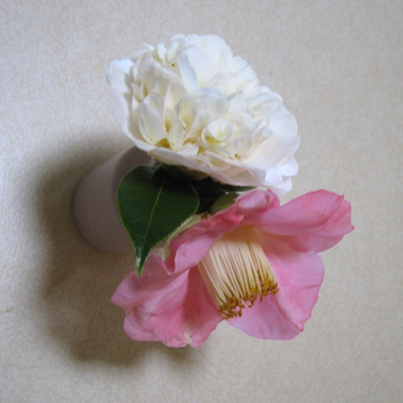 Camellias in bud vase