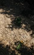 Veggie patch beginning