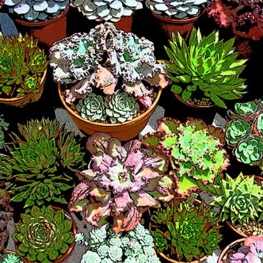 Crazy cacti group