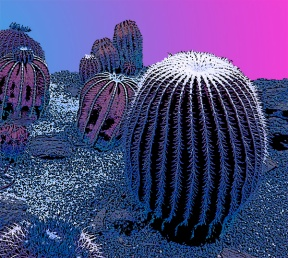 Evening cacti