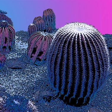 Evening cacti