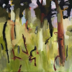 Dry forest 2